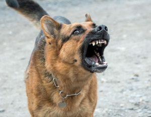 Post man dog attack
